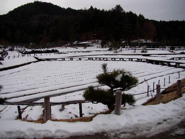2013-01・21 永澤寺の雪景色 (1).jpg