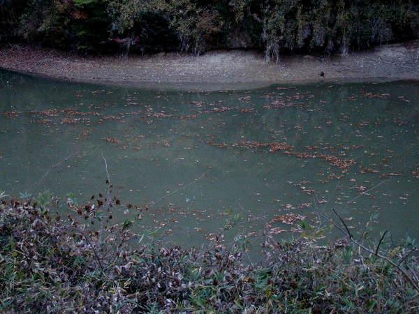 2013-12・07 晩秋の池面.jpg