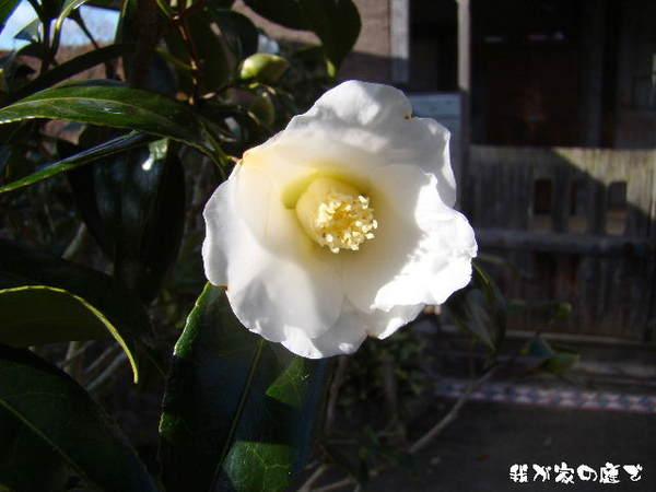 2013-12・08 我が家の庭で (2).jpg