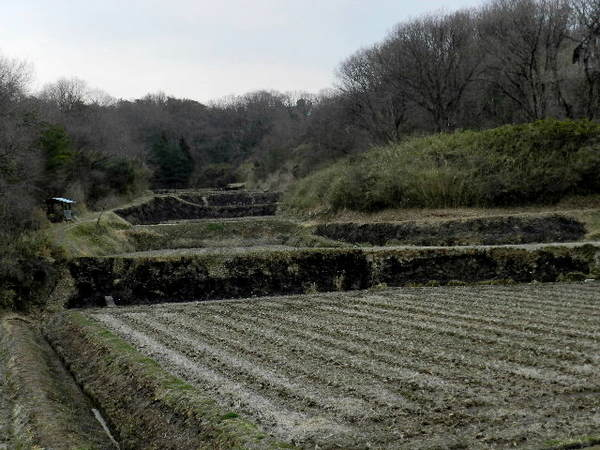 2014-03・25 野焼きの跡 (1).jpg