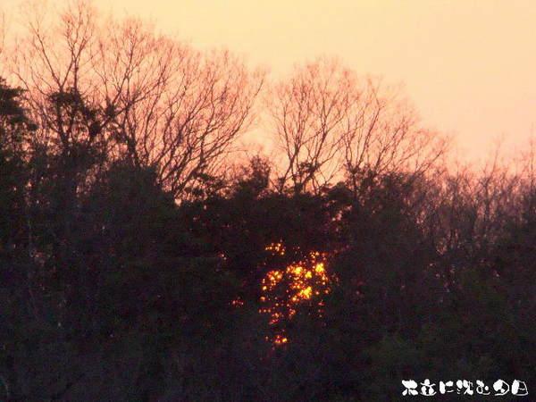 2014-03・27 木立に沈む夕日.jpg