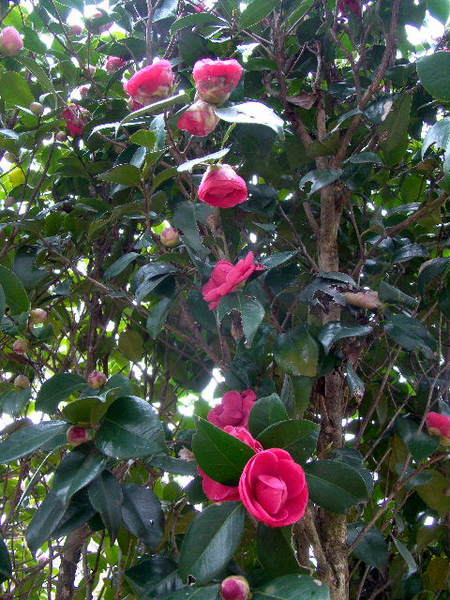 2014-03・30 我が家の庭で (6).jpg