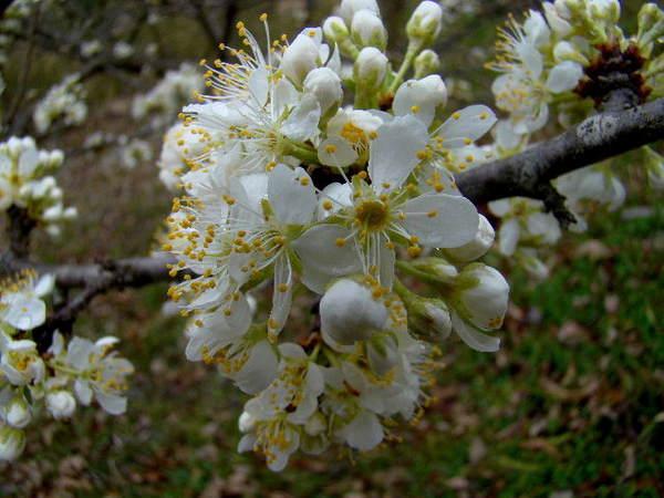 2014-03・30 隣地で咲く花 (1).jpg