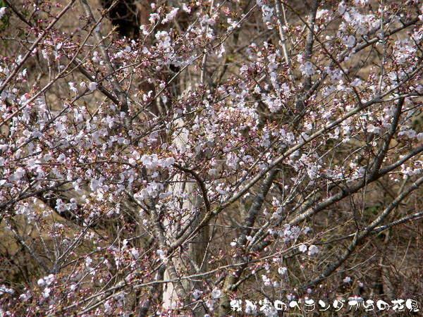 2014-04・03 我が家のベランダからの花見.jpg
