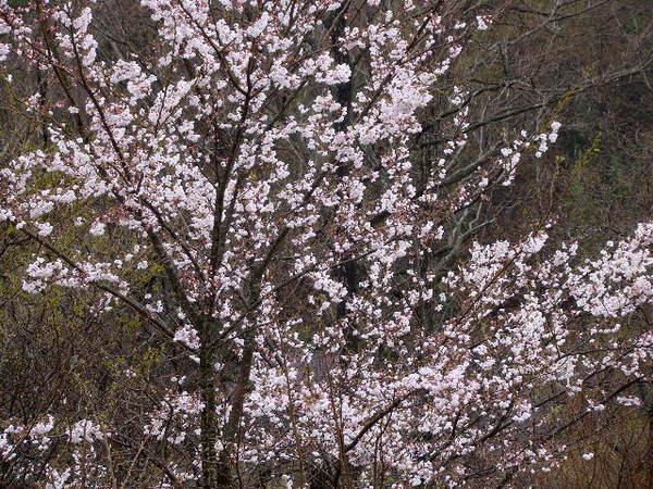 2014-04・04 我が家のベランダから.jpg