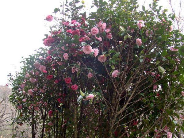 2014-04・06 我が家の庭で (2).jpg