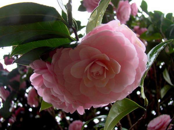 2014-04・06 我が家の庭で (3).jpg
