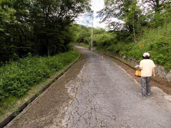 2014-06・13 導入路の草刈り (1).JPG