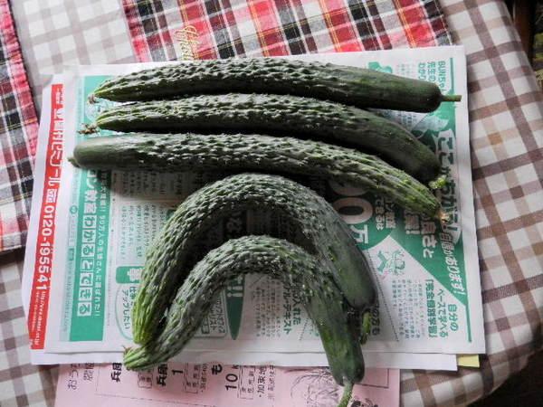 2014-06・23 収穫 (1).JPG