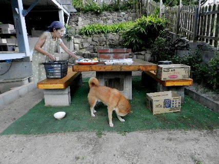 2014-08・24 我が家のスナップ (5).JPG