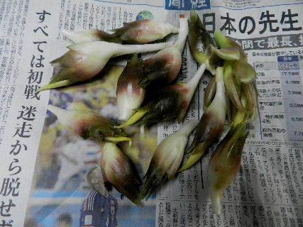 2014-08・25 収穫 (1).JPG