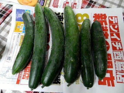 2014-08・25 収穫 (2).JPG