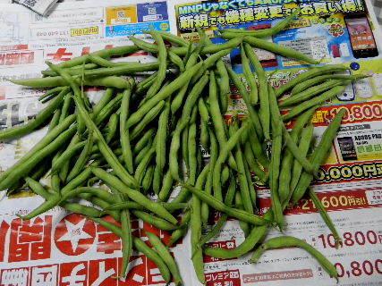 2014-08・25 収穫 (3).JPG