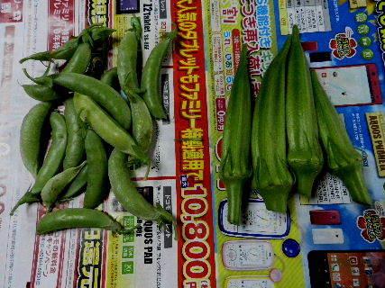2014-08・25 収穫 (4).JPG