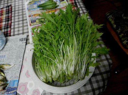 2014-08・25 収穫 (5).JPG