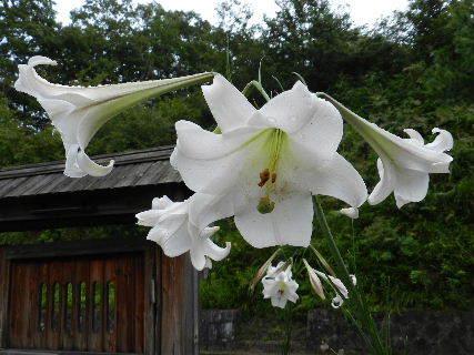 2014-08・27 我が家の庭で (2).JPG