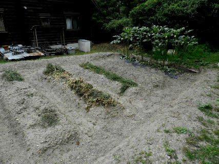 2014-09・19 我が家のスナップ (3).JPG