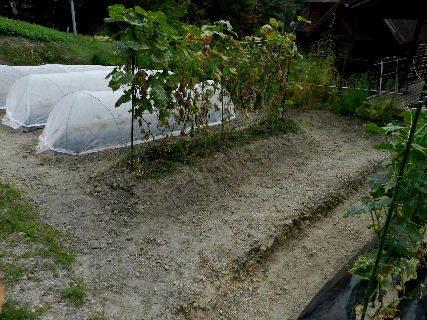 2014-09・19 我が家のスナップ (4).JPG