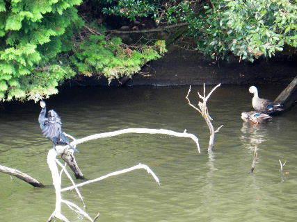 2014-10・10 今日の池には (3).JPG