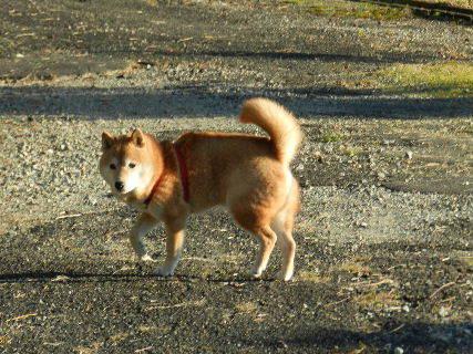 2014-10・24 散歩中の悪餓鬼.JPG