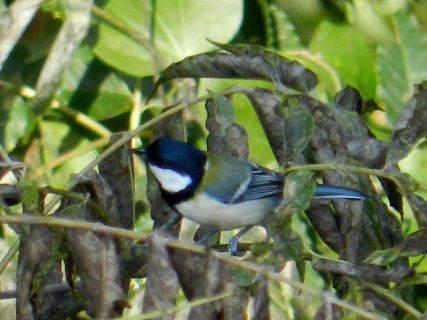 2014-10・27 里山の野鳥達 (2).JPG