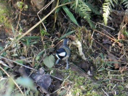 2014-10・27 里山の野鳥達 (3).JPG