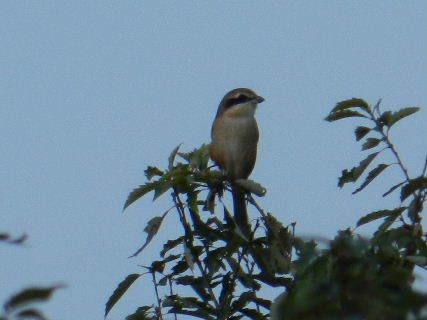 2014-10・27 里山の野鳥達 (4).JPG