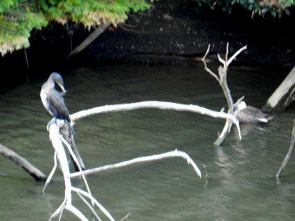 2014-10・28 今日の池には (3).JPG