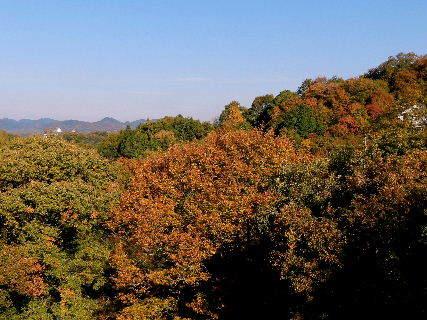 2014-11・21 色鮮やかに.JPG