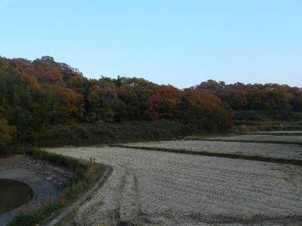 2014-11・24 黄昏時の里山 (1).JPG