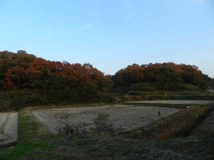2014-11・24 黄昏時の里山 (2).JPG