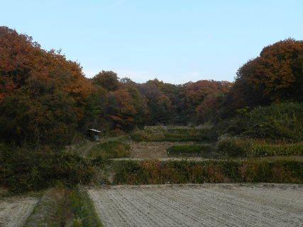 2014-11・24 黄昏時の里山 (3).JPG