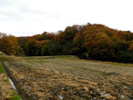 2014-11・25 雨の狭間の里山 (3).JPG