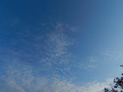 2014-11・28 秋の名残り.JPG