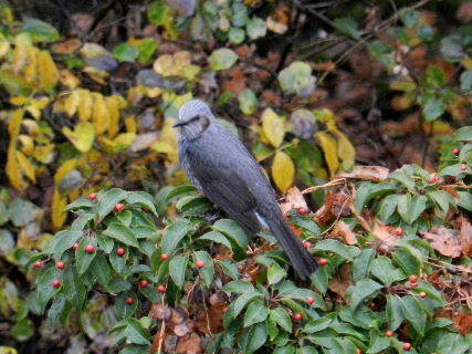 2014-11・29 今日の野鳥達 (4).JPG