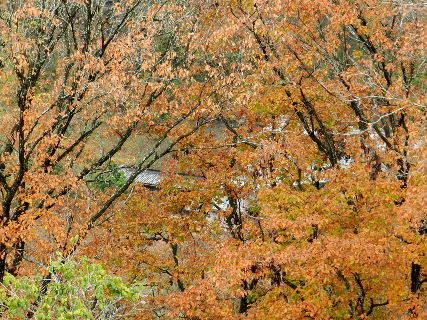 2014-12・01 木立越しの古民家.JPG
