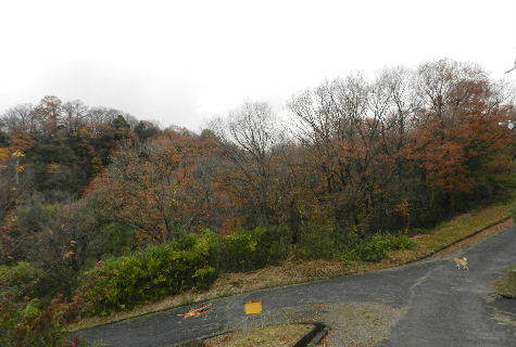 2014-12・04 冬枯れが始まった里山 (3).JPG