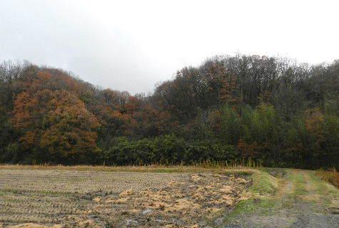 2014-12・04 冬枯れが始まった里山 (7).JPG