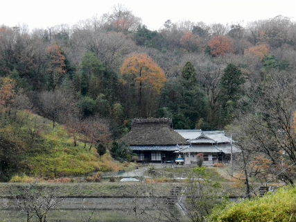 2014-12・04 冬枯れが始まった里山 (8).JPG