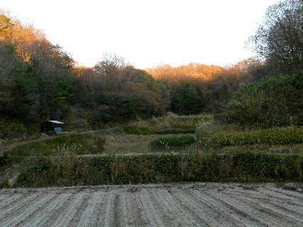 2014-12・05 夕暮前の里山.JPG