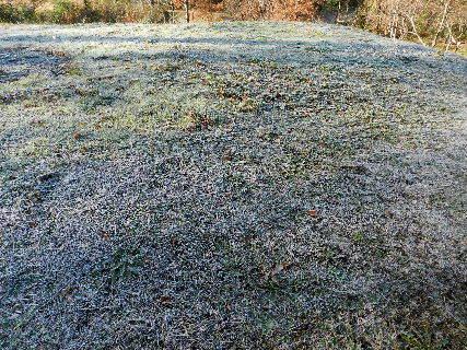 2014-12・08 今朝も霜の花が・・・ (1).JPG