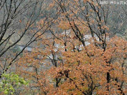 2014-12・11 霧雨に煙る古民家.JPG