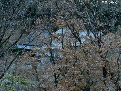 2014-12・12 夕暮の中で.JPG