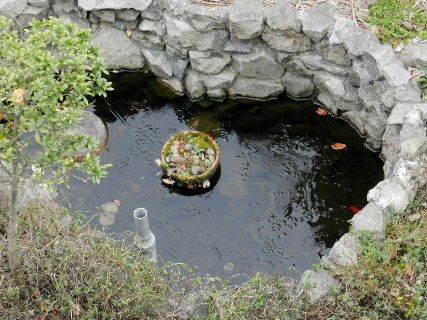 2014-12・15 我が家の池にも初氷.JPG