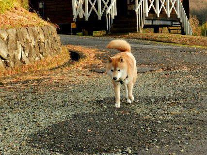 2014-12・16 散歩中の悪餓鬼.JPG
