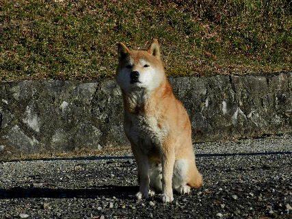 2014-12・17 悪餓鬼 (2).JPG