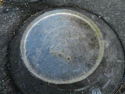 2014-12・18 睡蓮鉢に・・・.JPG