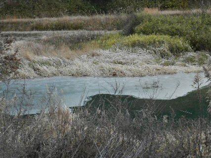 2014-12・18 里山の池にも初氷が (2).JPG