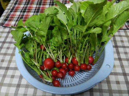 2014-12・24 収穫 (3).JPG
