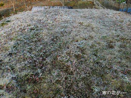 2014-12・30 霜の花が・・・.JPG